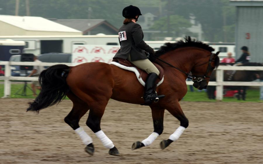 Equitazione: Horse Excellence
